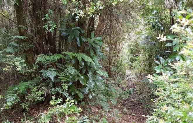 hacienda-chamiza-30
