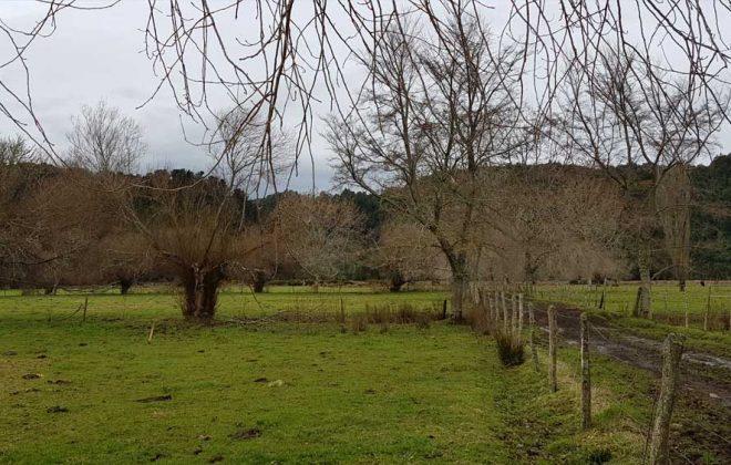 hacienda-chamiza-parcelacion-puerto-montt-13